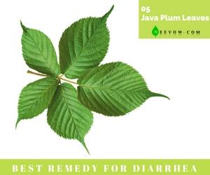 (Java Plum Leaves)Diarrhea Home Remedies-5